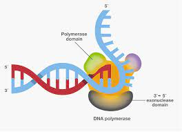 DNA Polymerase Market Size, Share, Growth Opportunity & Global Forecast to 2027
